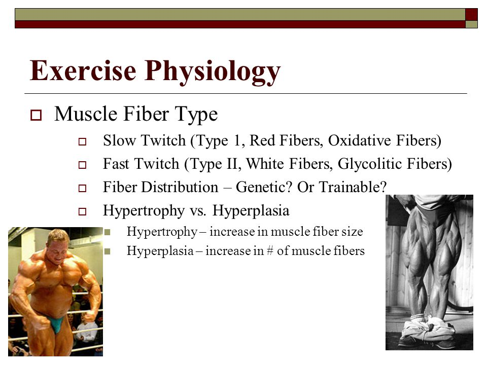 Exercise Physiology Muscle Fiber Type