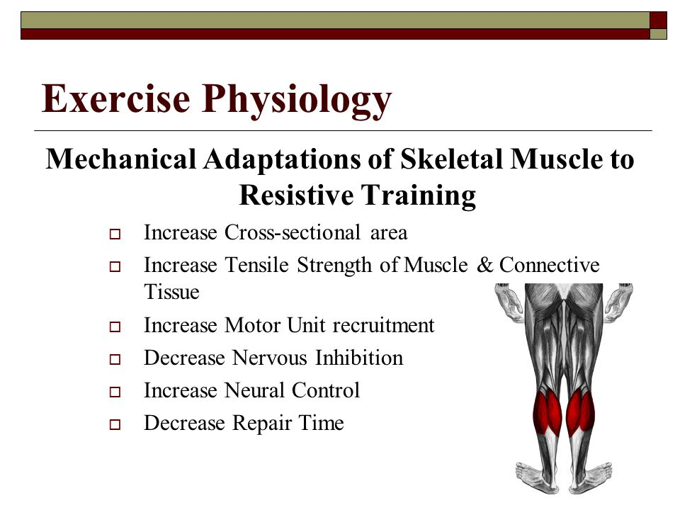 Mechanical Adaptations of Skeletal Muscle to Resistive Training