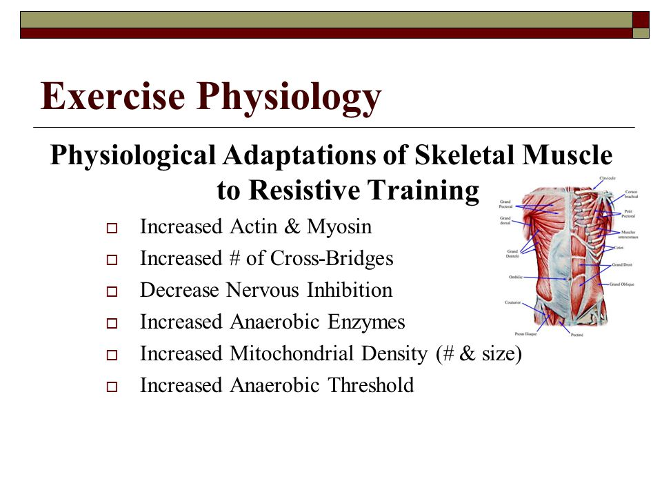 Physiological Adaptations of Skeletal Muscle to Resistive Training