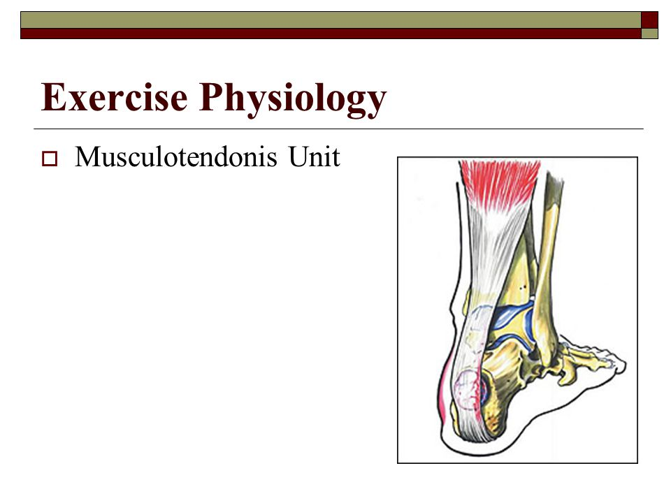 Exercise Physiology Musculotendonis Unit