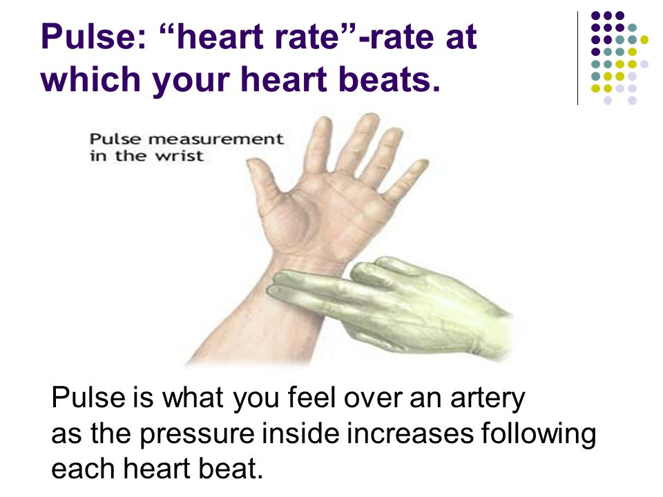 Pulse: heart rate -rate at which your heart beats.