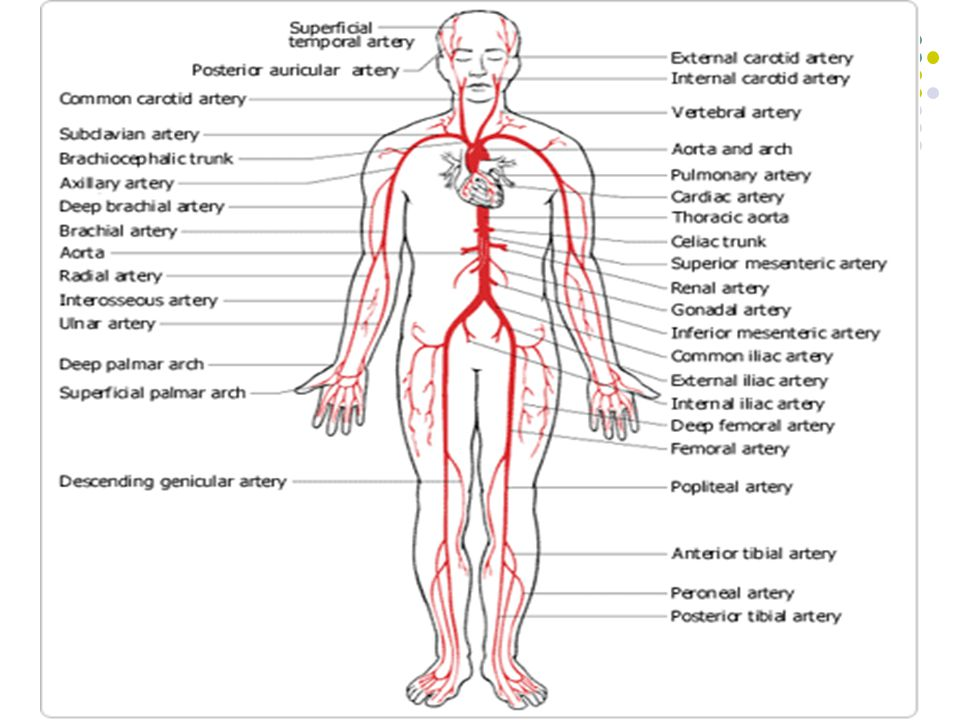 Main Arteries