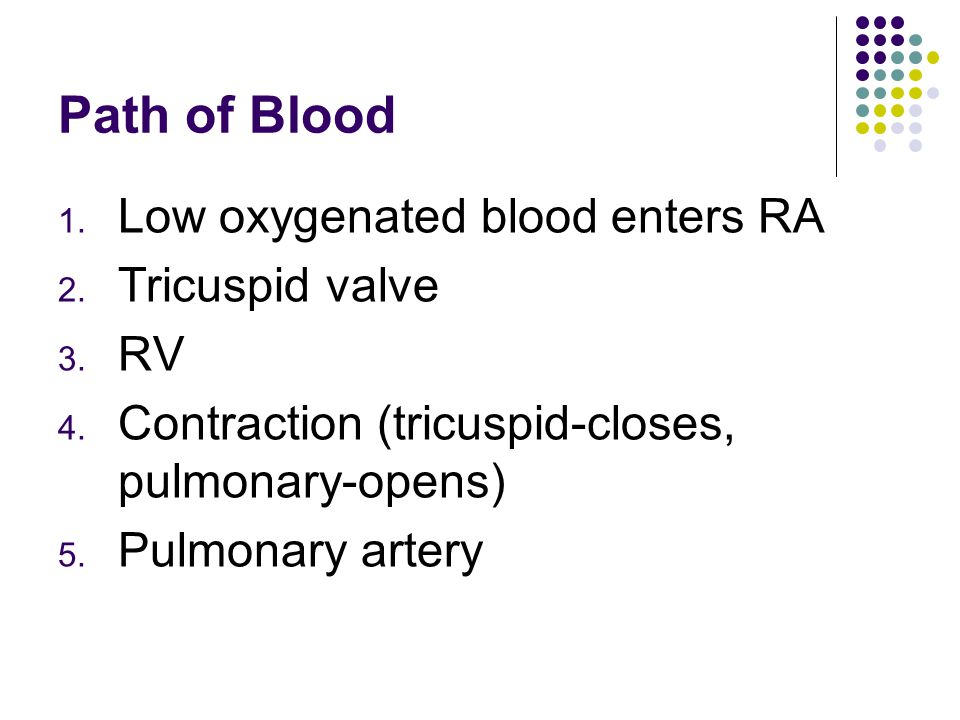 Path of Blood Low oxygenated blood enters RA Tricuspid valve RV