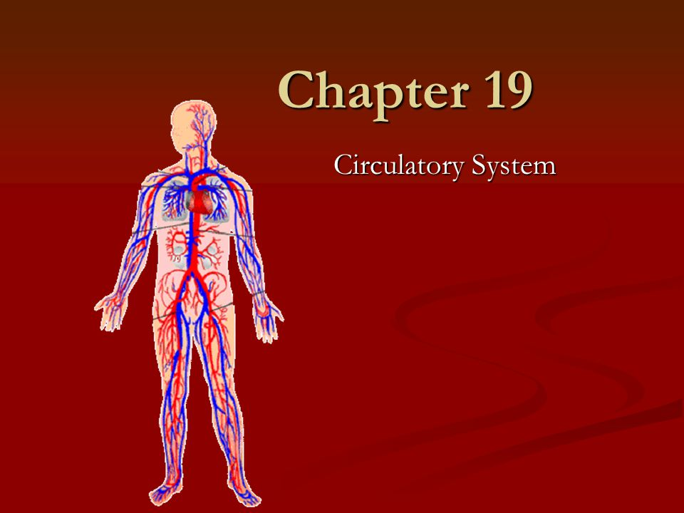 Chapter 19 Circulatory System