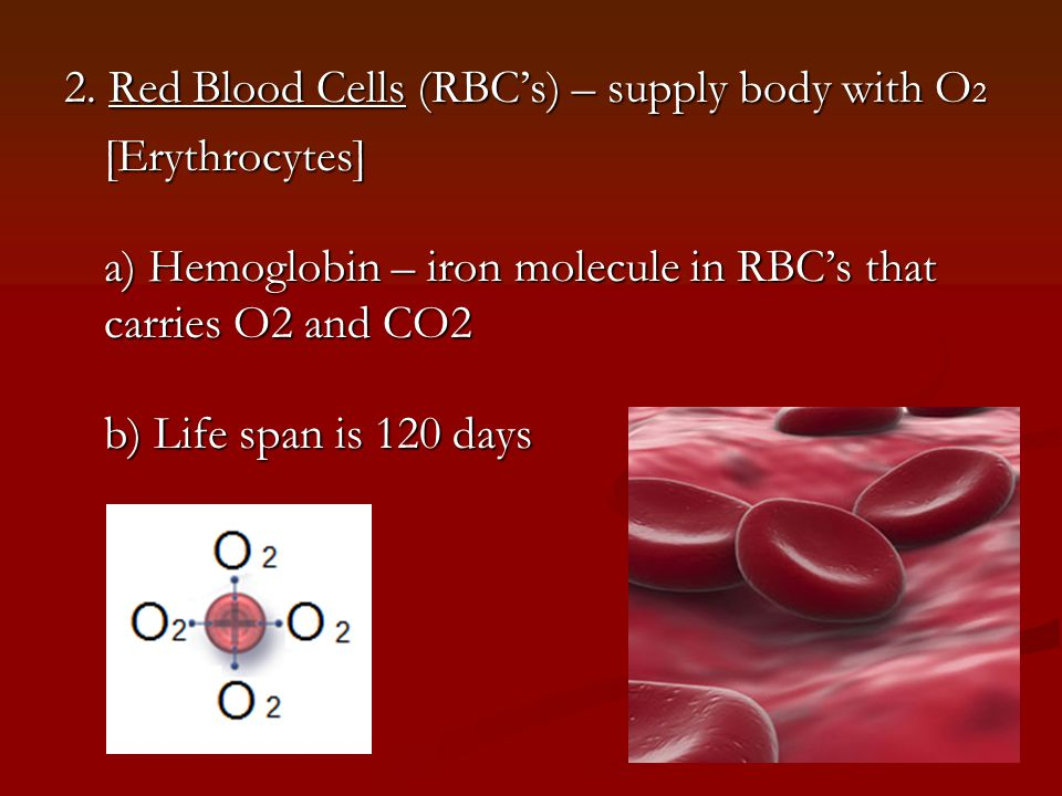 2. Red Blood Cells (RBC's) – supply body with O2