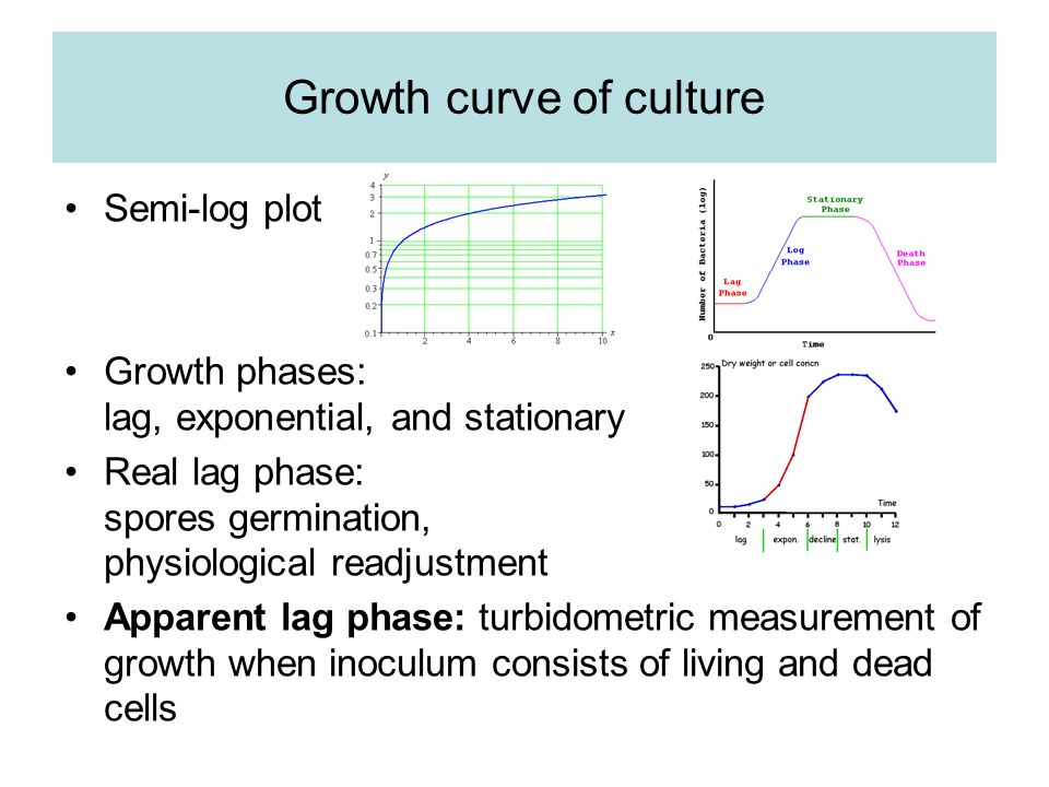 Growth curve of culture