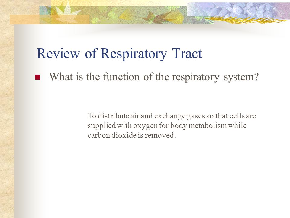 Review of Respiratory Tract