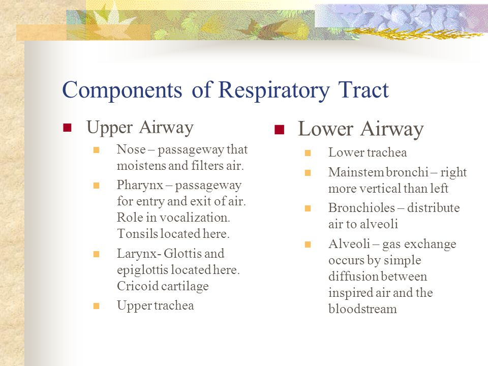 Components of Respiratory Tract