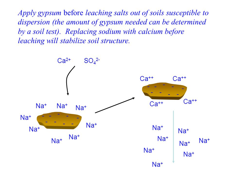Apply gypsum before leaching salts out of soils susceptible to dispersion (the amount of gypsum needed can be determined by a soil test). Replacing sodium with calcium before leaching will stabilize soil structure.