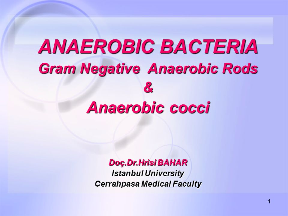 Gram Negative Anaerobic Rods Cerrahpasa Medical Faculty