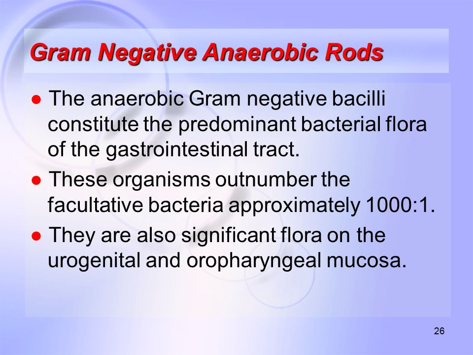 Gram Negative Anaerobic Rods