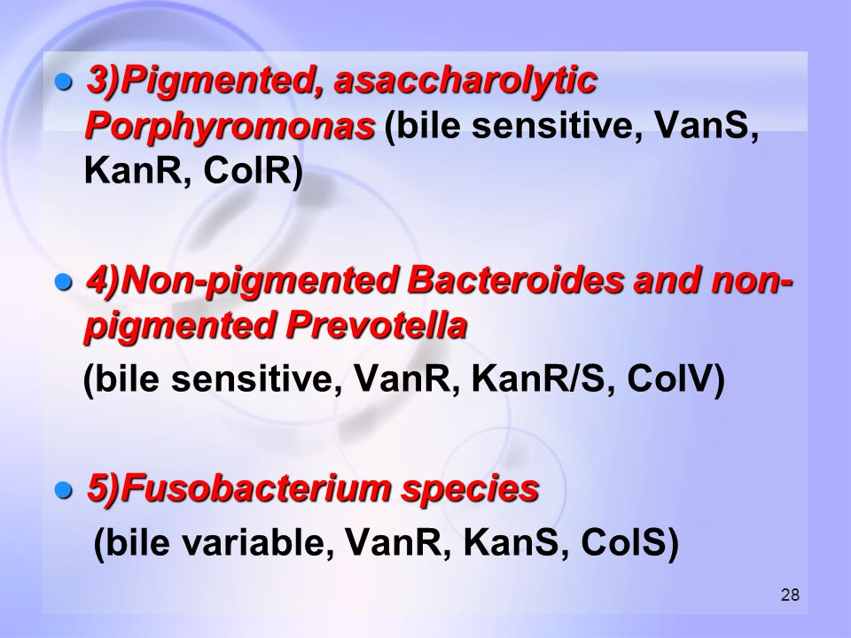 ● 3)Pigmented, asaccharolytic Porphyromonas (bile sensitive, VanS, KanR, ColR)