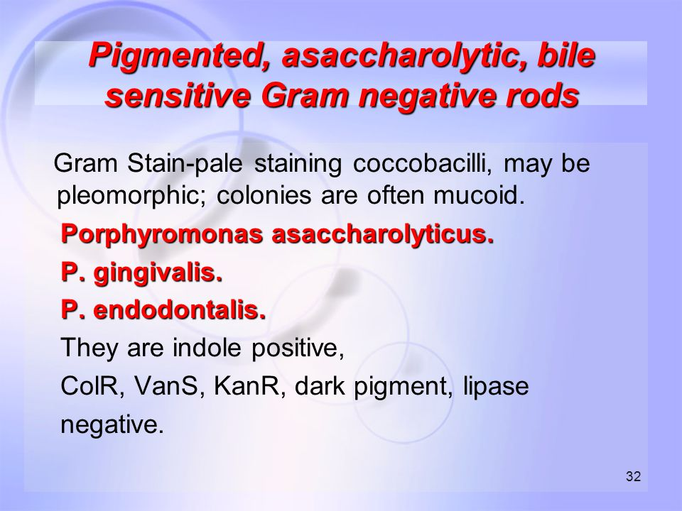 Pigmented, asaccharolytic, bile sensitive Gram negative rods