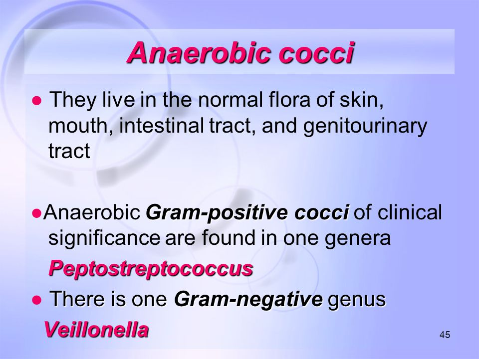 Anaerobic cocci ● They live in the normal flora of skin, mouth, intestinal tract, and genitourinary tract.