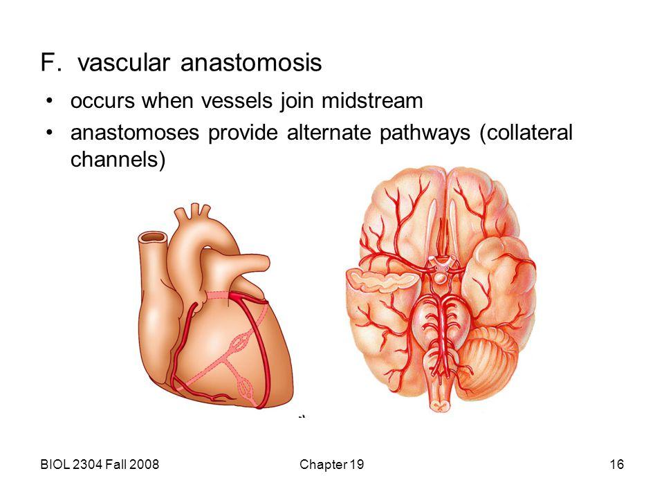F. vascular anastomosis