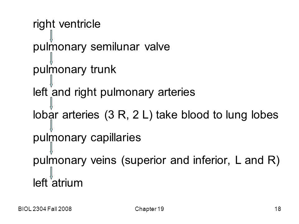 pulmonary semilunar valve pulmonary trunk