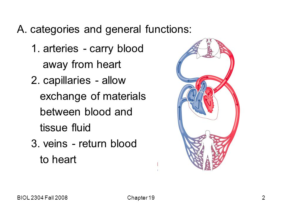 A. categories and general functions: