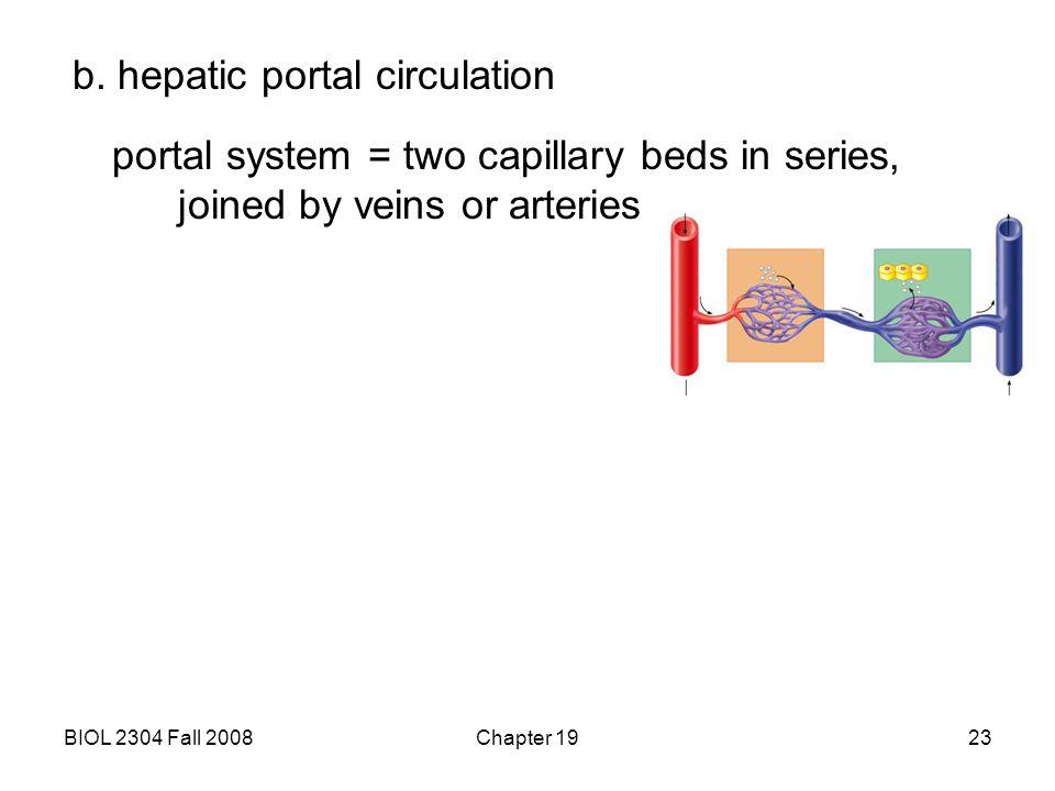 b. hepatic portal circulation