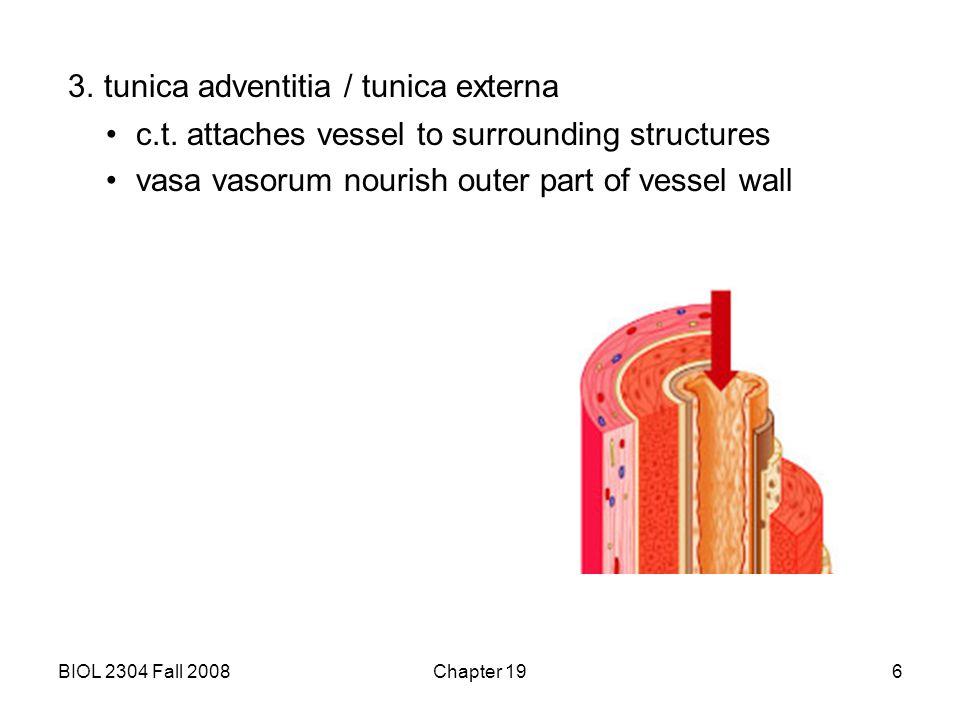 3. tunica adventitia / tunica externa