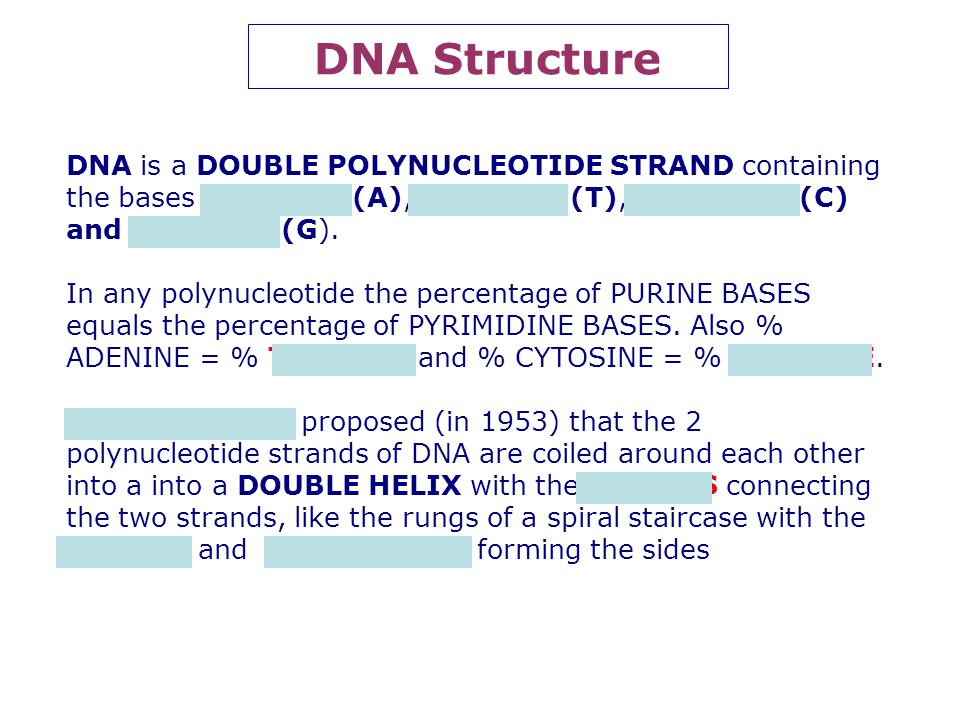 DNA Structure DNA is a DOUBLE POLYNUCLEOTIDE STRAND containing the bases ADENINE (A), THYMINE (T), CYTOSINE (C) and GUANINE (G).