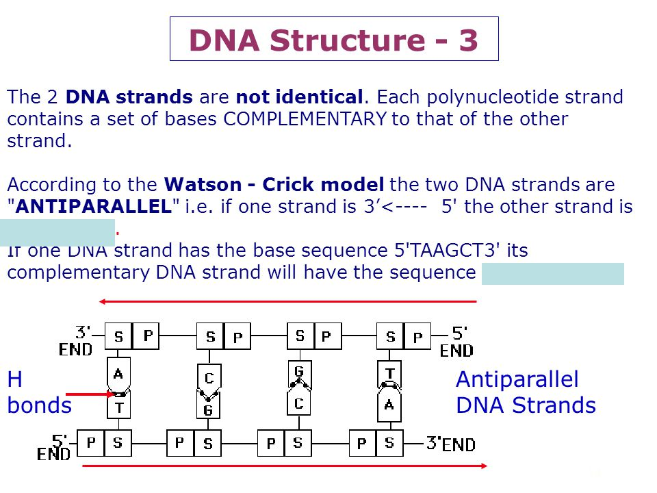 DNA Structure - 3 H bonds Antiparallel DNA Strands