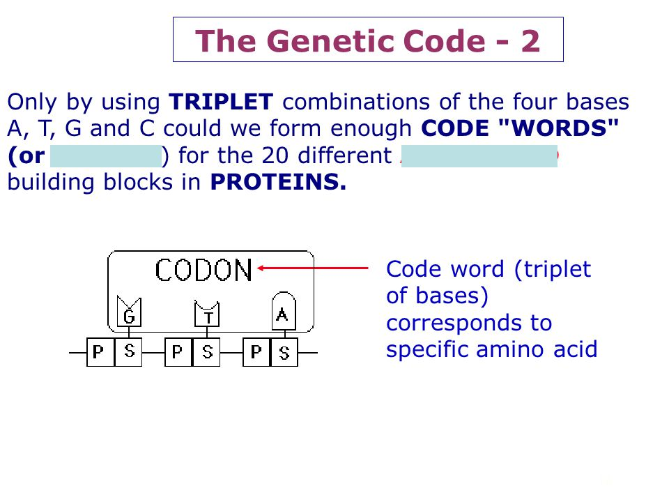 The Genetic Code - 2