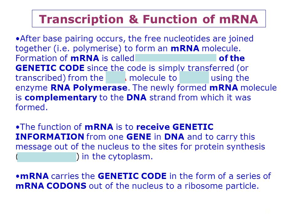 Transcription & Function of mRNA