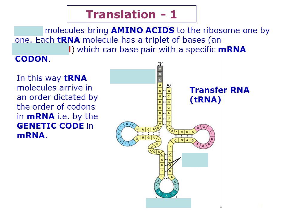 Translation - 1