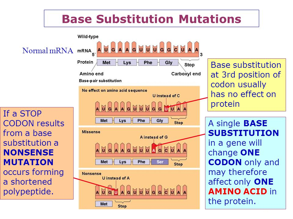 Base Substitution Mutations