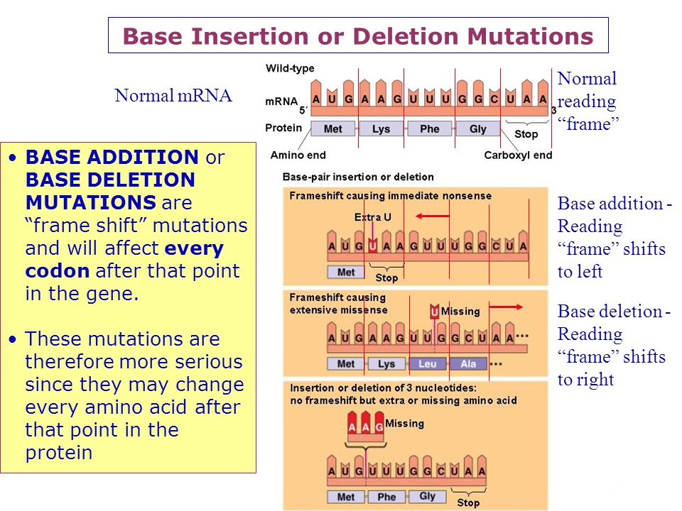 Base Insertion or Deletion Mutations