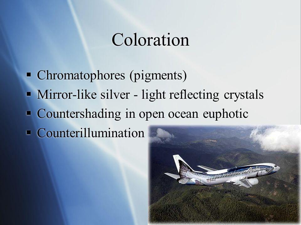 Coloration Chromatophores (pigments)