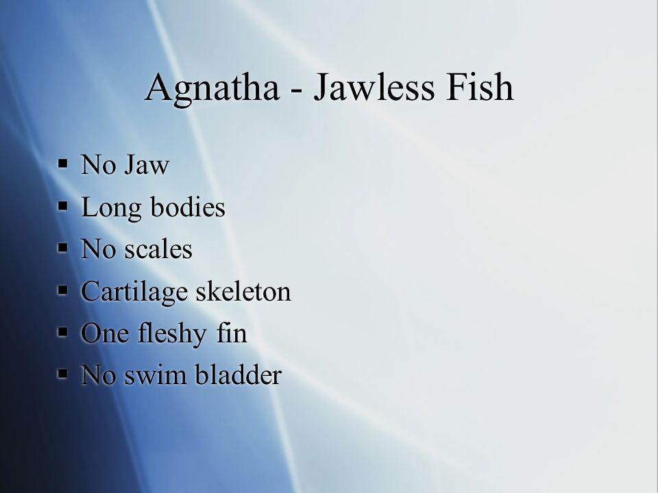 Agnatha - Jawless Fish No Jaw Long bodies No scales Cartilage skeleton