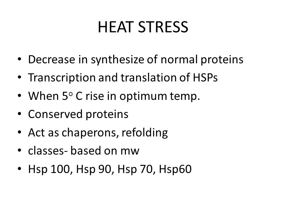 HEAT STRESS Decrease in synthesize of normal proteins
