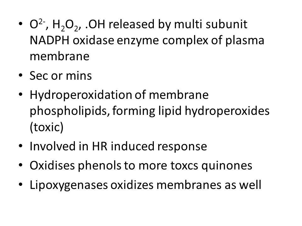 O2-, H2O2, .OH released by multi subunit NADPH oxidase enzyme complex of plasma membrane