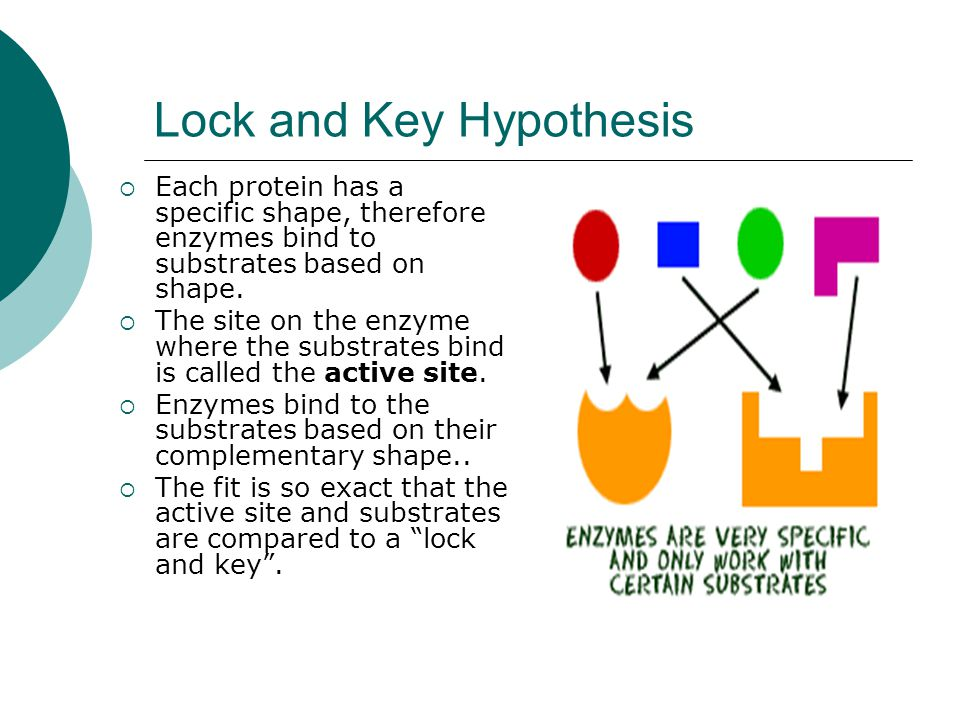 Lock and Key Hypothesis