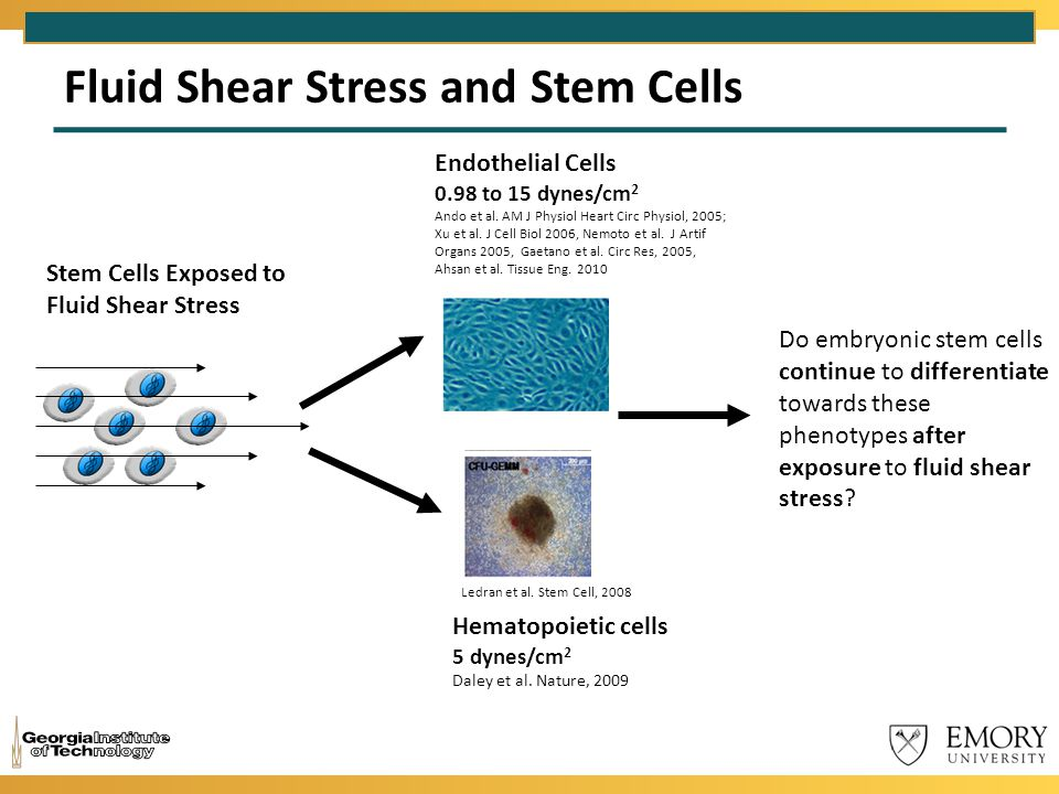 Fluid Shear Stress and Stem Cells