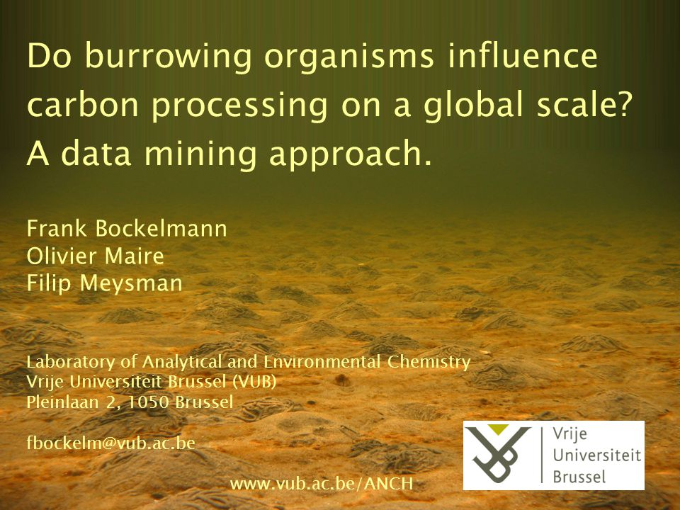 Do burrowing organisms influence carbon processing on a global scale