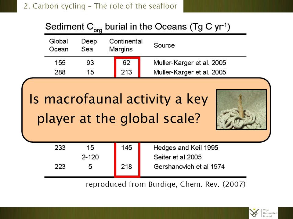 Is macrofaunal activity a key player at the global scale
