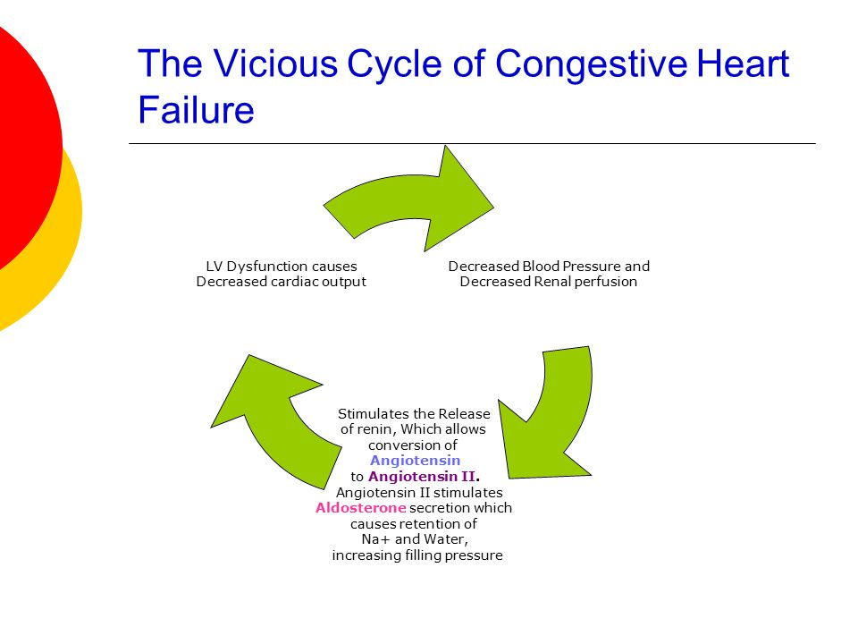 The Vicious Cycle of Congestive Heart Failure