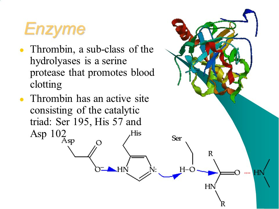 Enzyme Thrombin, a sub-class of the hydrolyases is a serine protease that promotes blood clotting.