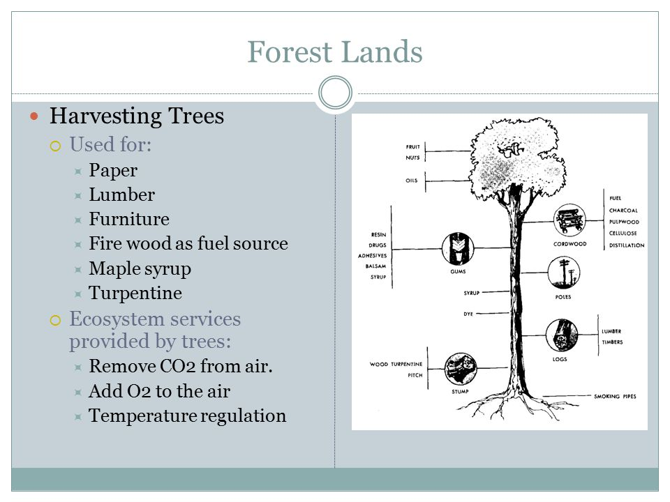 Forest Lands Harvesting Trees Used for: