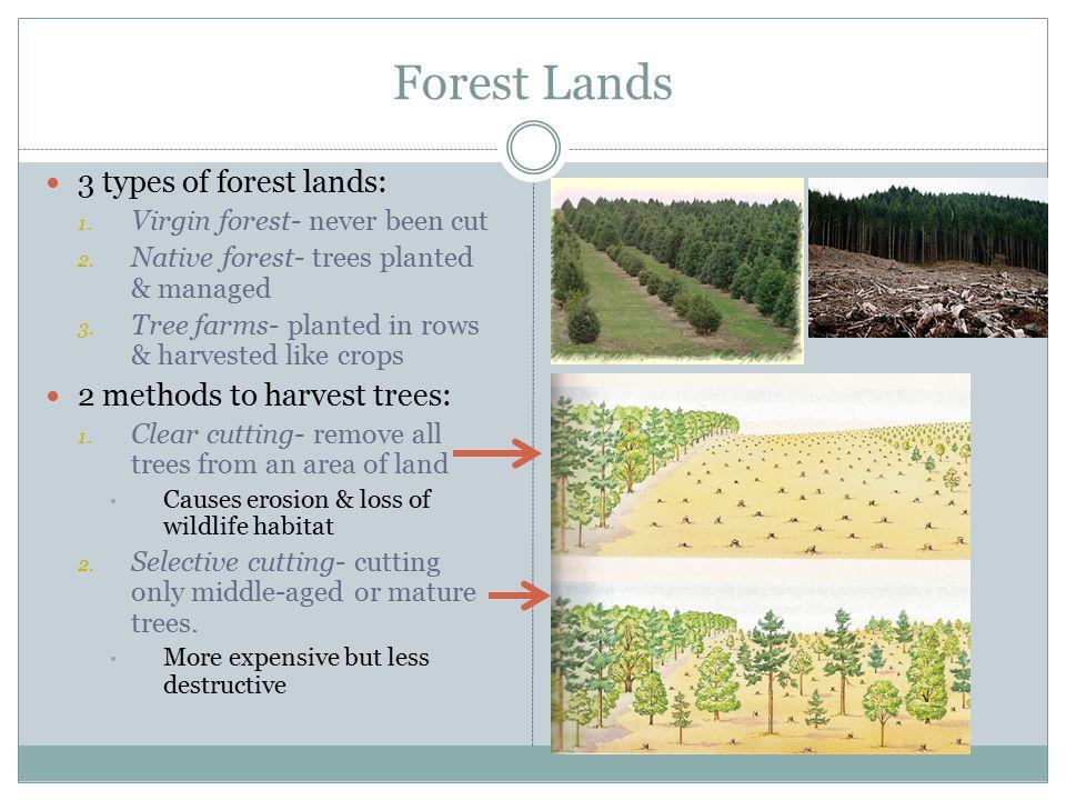 Forest Lands 3 types of forest lands: 2 methods to harvest trees: