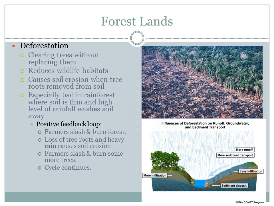 Forest Lands Deforestation Clearing trees without replacing them.