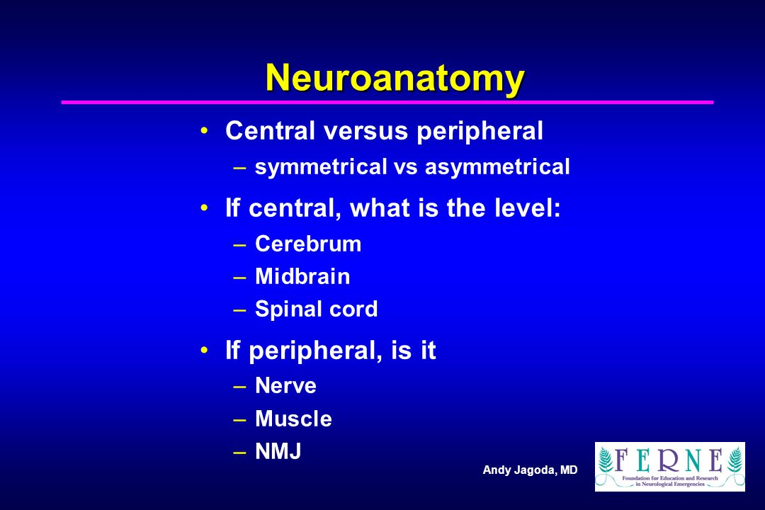 Neuroanatomy Central versus peripheral If central, what is the level: