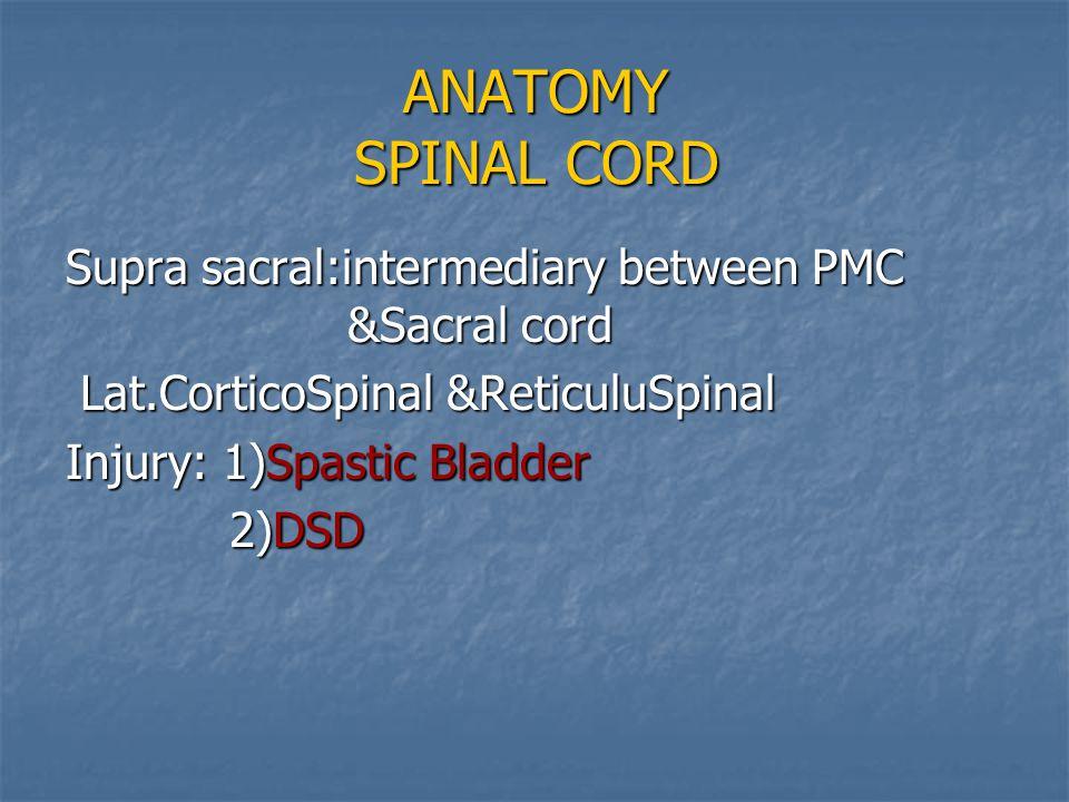 ANATOMY SPINAL CORD Supra sacral:intermediary between PMC &Sacral cord