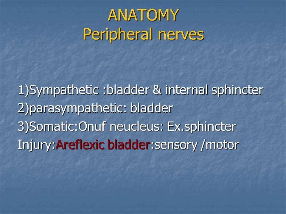 ANATOMY Peripheral nerves