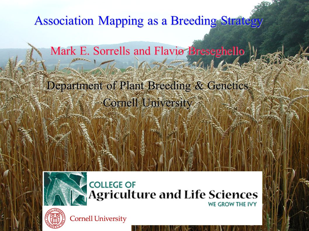 Association Mapping as a Breeding Strategy