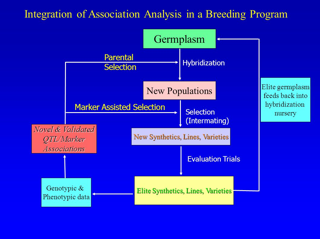 Integration of Association Analysis in a Breeding Program