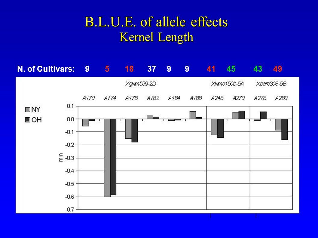 B.L.U.E. of allele effects Kernel Length