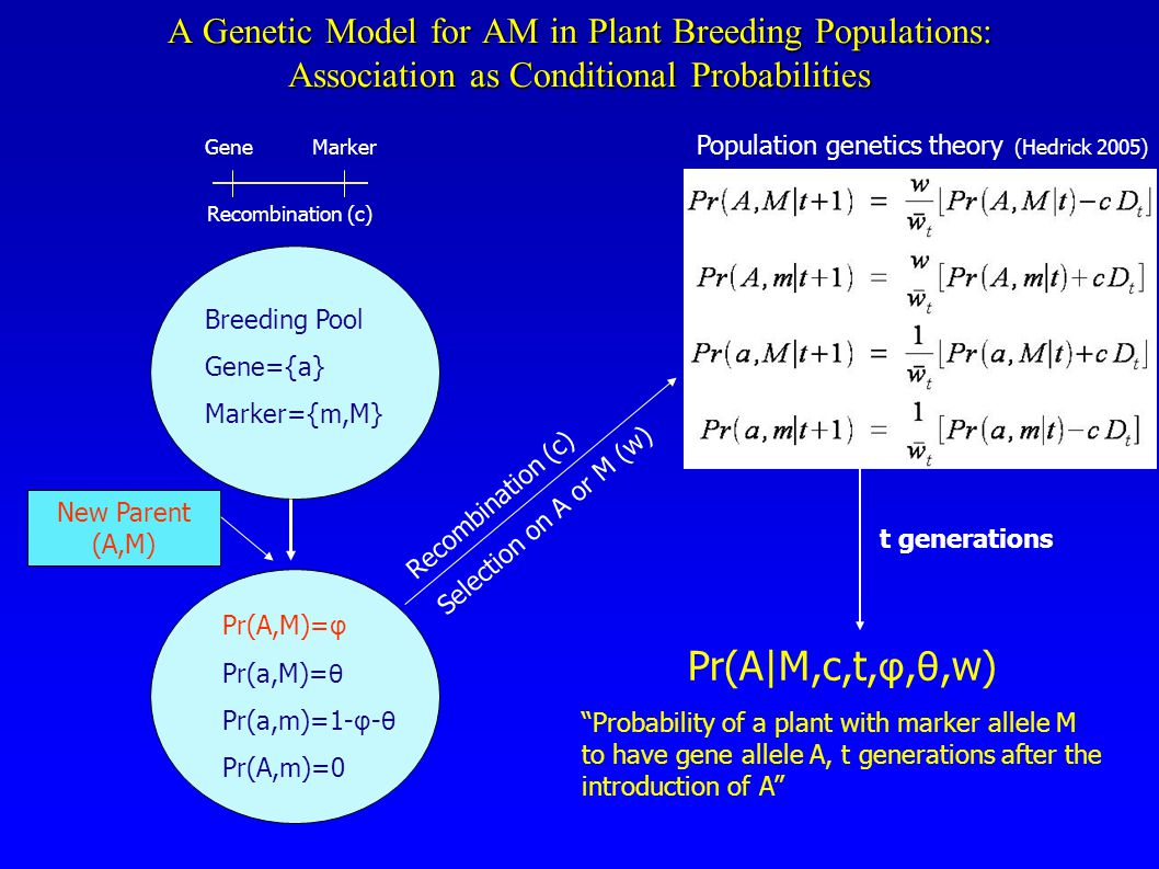 A Genetic Model for AM in Plant Breeding Populations: Association as Conditional Probabilities